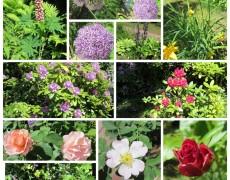 Viele bunte Blüten, ach wie schön!