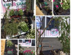 Vorschau: Gestaltung Café Cup & Cake