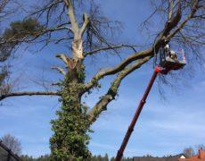 Vorschau: Ein Gartenauftrag nach Sturmtief Xavier