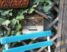 Wildbienen in meinem Garten
